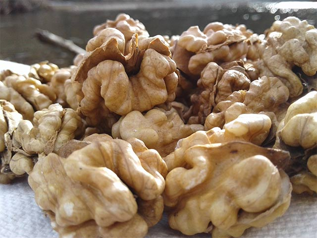 Чем полезен грецкий орех для организма женщины