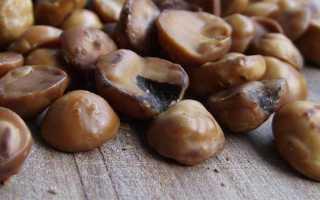 Авелланский орех