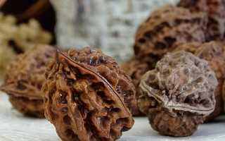 Маньчжурский орех лечебные свойства